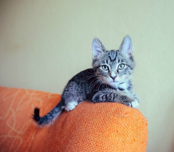 a small cat sitting on the back of an orange chair with it's ears perked up, looking into the camera.